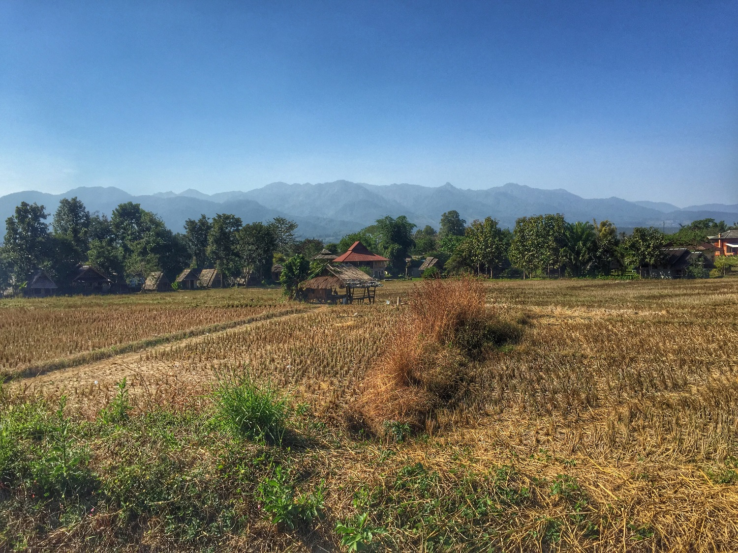 rice fields in pai thailand