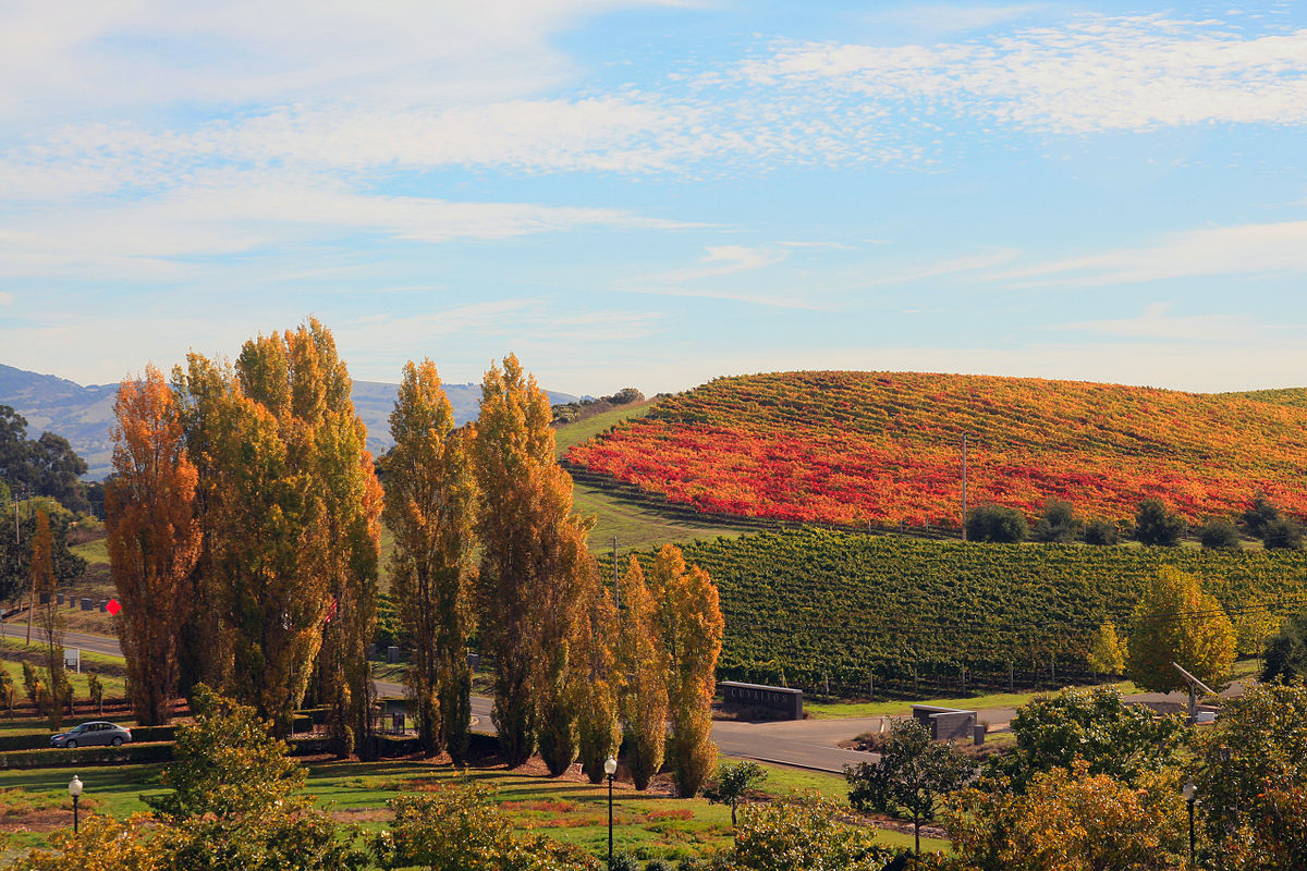 Spending time in the Napa Valley is one of the Top things to do in California ... photo by CC user Brocken Inaglory on sites.google.com