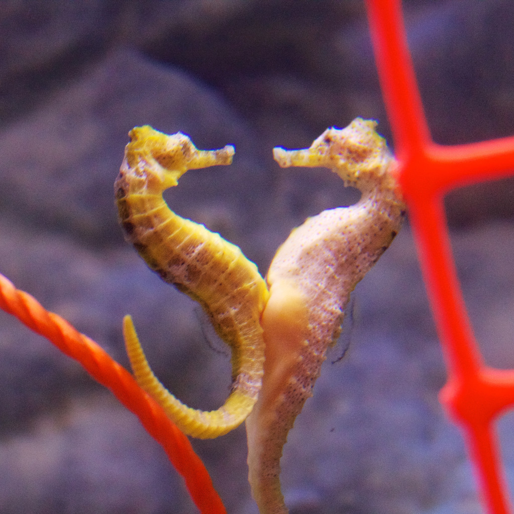 Seahorse World is one of many kid-friendly attractions in Tasmania
