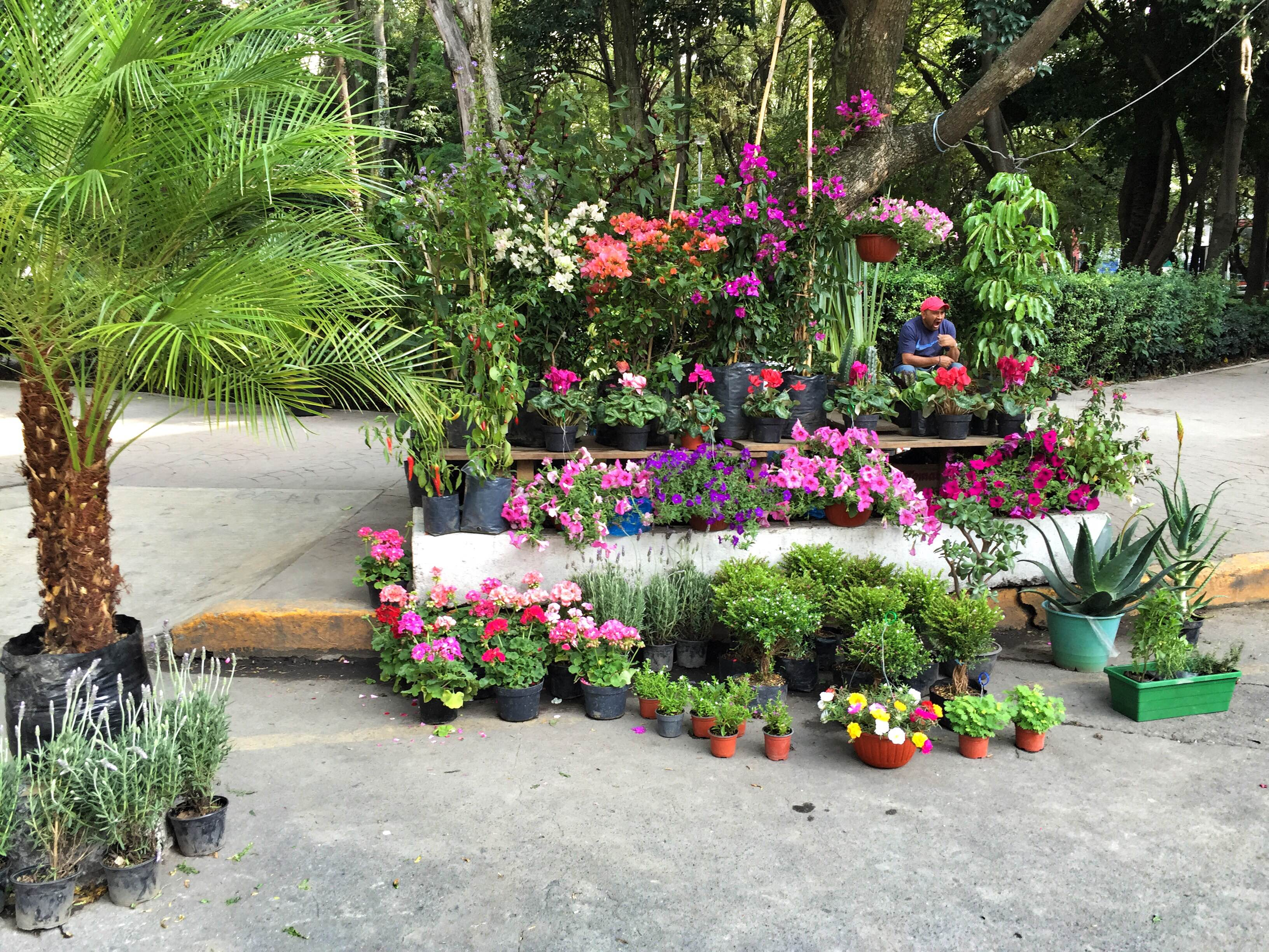 best neighborhood in Mexico City, Condesa
