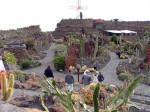 Cactus in Lanzarote