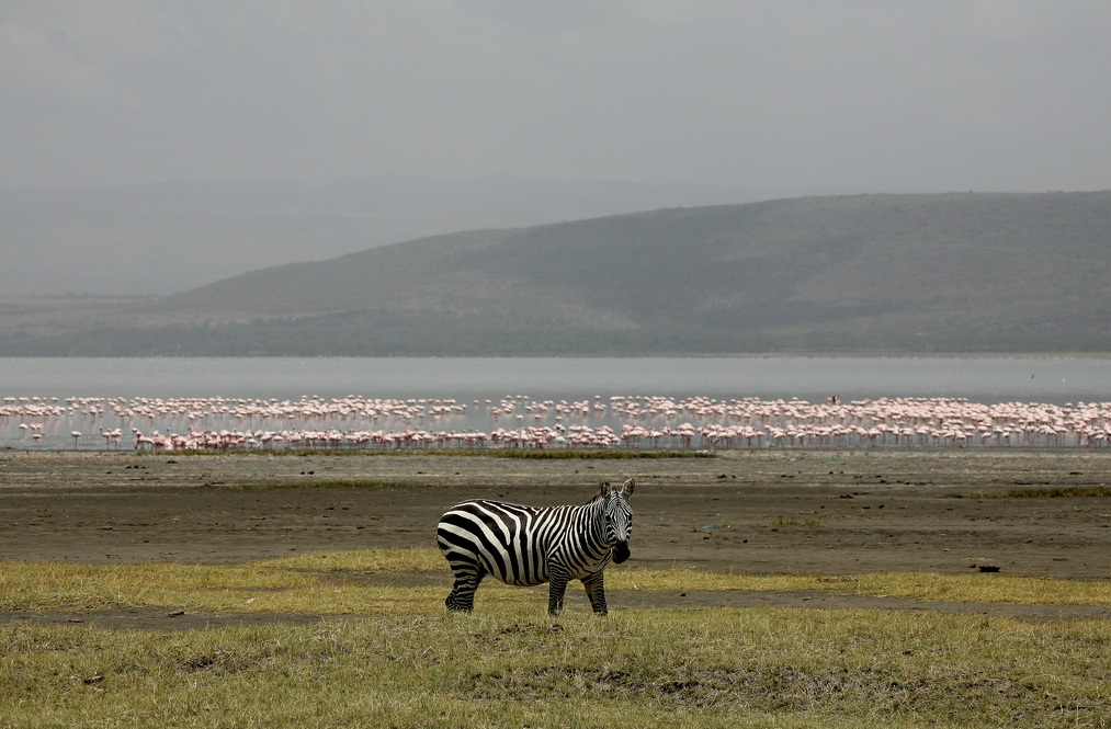 Wildlife at Lake Nakuru