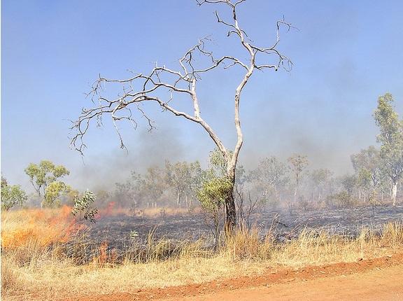 Bush Fire