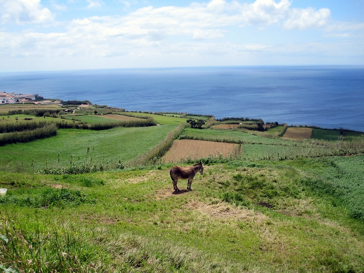 green pastures along the ocean