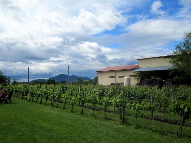 Tokaj Winery in Slovakia