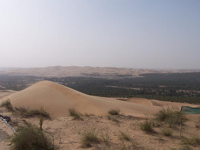 Oasis in UAE