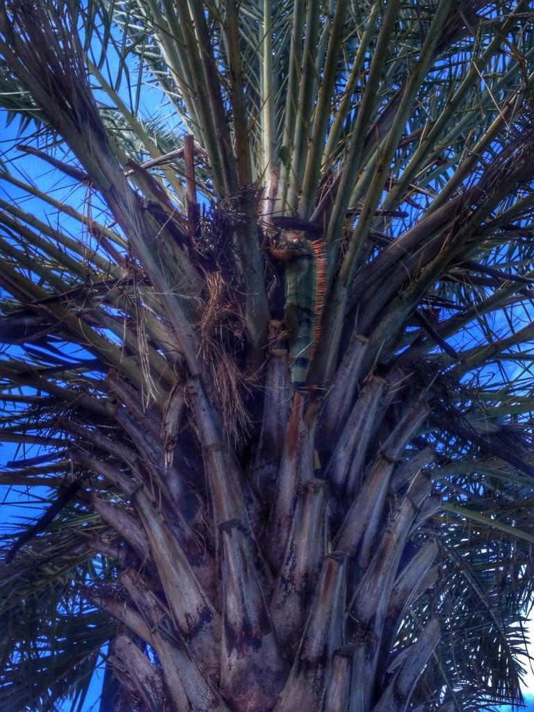 iguana in palm tree