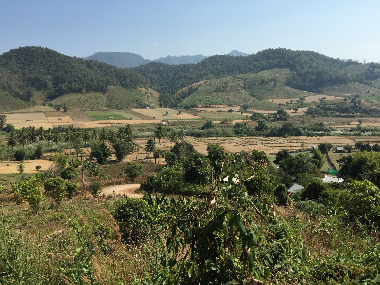 rice fields in Mae Hong Son, Thailand