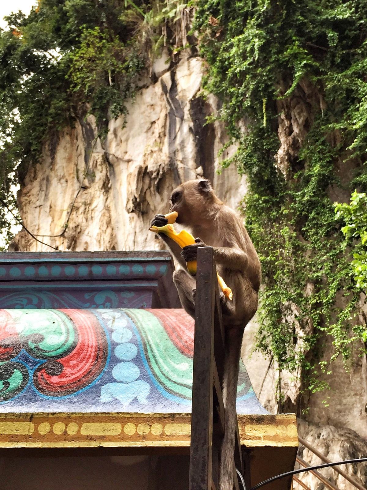 monkeys at Batu Caves, Kuala Lumpur