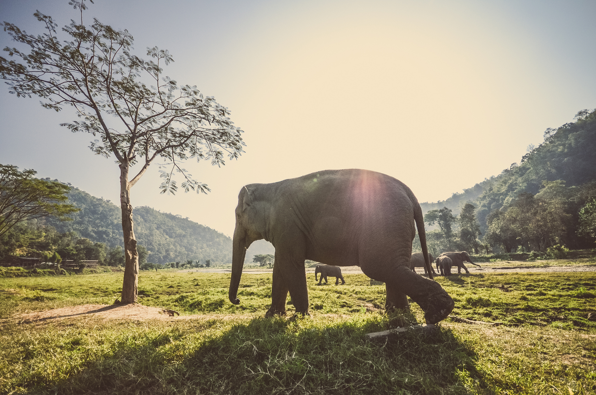 Elephants make for amazing travel pictures ... photo by CC user eddymilfort on flickr