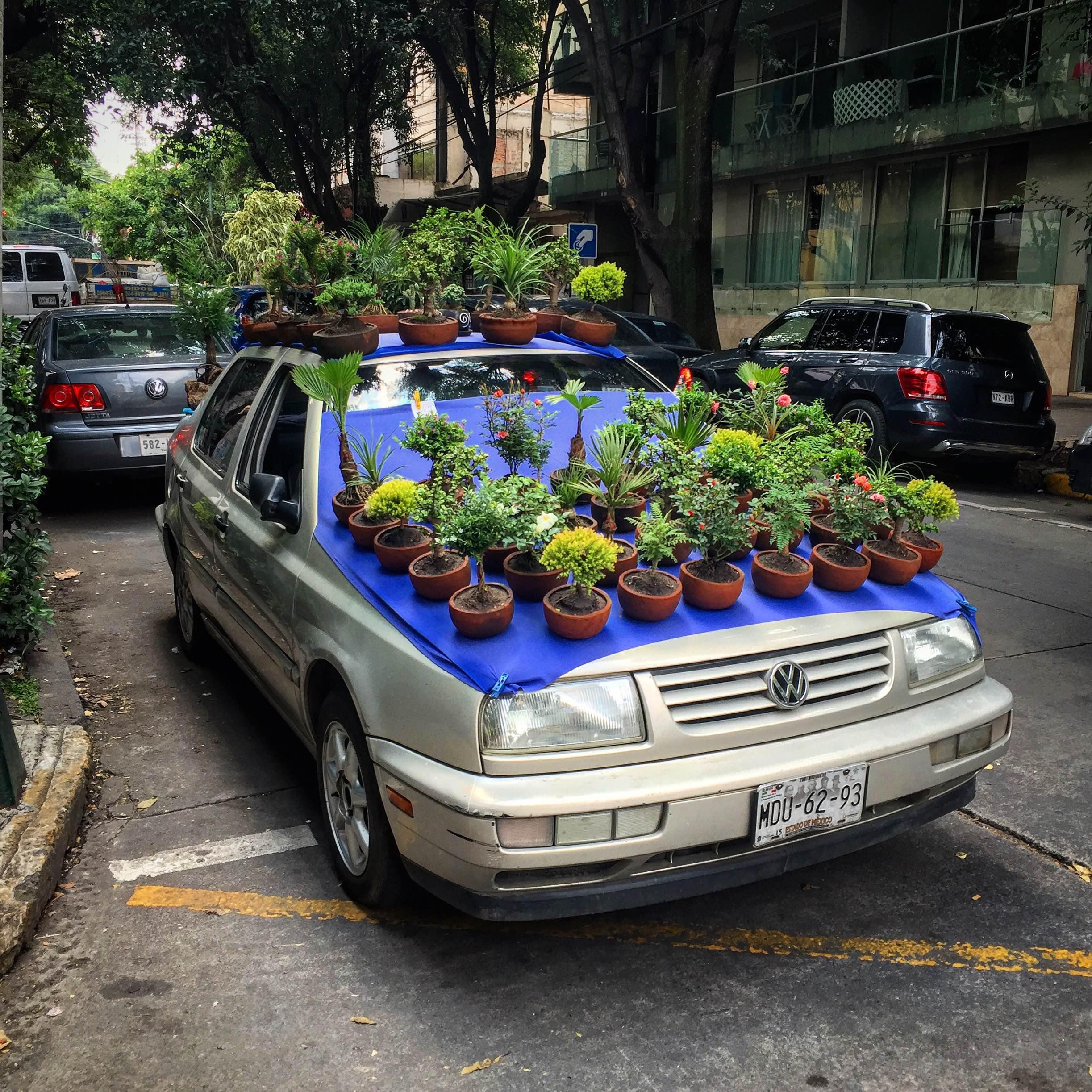 flowers in Condesa